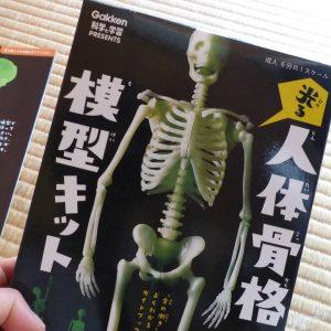 人体骨格模型キット